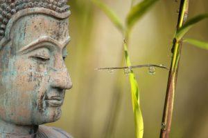 Come diventare stabile come una montagna ma flessibile come il bambù